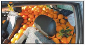 robos-de-naranjas
